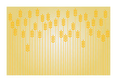 Wheat background. Wheat and grain patterned background Stock Photography