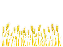 Wheat background. With place for text Stock Images