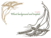Wheat background and template vintage style_2. Wheat background and template vintage style isolated on white background Royalty Free Stock Photos