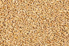 Wheat background view from the top close up Stock Photography