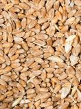Wheat background view from the top. Photo of abstract background Royalty Free Stock Images
