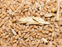 Wheat background view from the top. Photo of abstract background Royalty Free Stock Photos