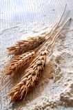 Wheat for bakery elaborations in a white surface of wood Stock Images