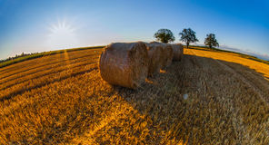 Wheat Bale Royalty Free Stock Image