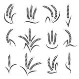 Wheat or barley ears branch. Isolated on white background. Seeds and grains harvest symbols for logo design. Vector illustration Royalty Free Stock Images