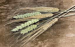 Wheat and barley Royalty Free Stock Photo