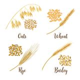 Wheat, barley, oat and rye. Cereals 3d icon vector set. Four cereals grains and ears. Harvest time seeds and plants. Can be used for cooking, bakery, tags Royalty Free Stock Photo