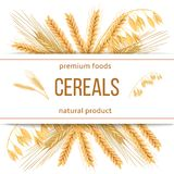 Wheat, barley, oat and rye. 3d icon vector set. Four cereals grains and ears with text premium foods, natural product Royalty Free Stock Photo