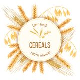 Wheat, barley, oat and rye. Four cereals grains and ears. Round label, text Royalty Free Stock Photos
