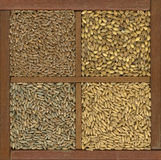 Wheat, barley, oat and rye grain. 4 cereal grains in a rustic wooden box or drawer, clockwise from upper left - red hard winter wheat, barley, oats, rye Royalty Free Stock Photo