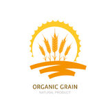 Wheat, barley, or rye ears, field and sun. Vector logo, label, package design elements. Concept for agriculture, organic cereal products, harvesting grain and Stock Photos