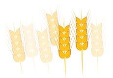 Wheat, Barley or Rye Stock Photography