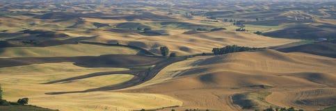 Wheat and Barley, S.E. Washington Stock Images
