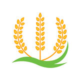 Wheat barley spike yellow isolated on white background. Grain plant silhouette. Spica icon. Ear organic. Vector illustration flat design. Cereals natural Royalty Free Stock Images