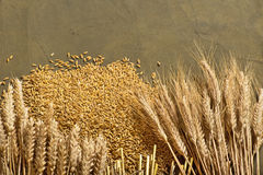 Wheat and barley Stock Photo