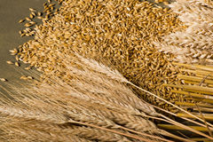 Wheat and barley Stock Images