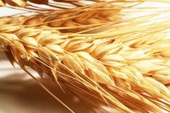Wheat Royalty Free Stock Photos
