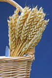 Wheat in basket Royalty Free Stock Photo