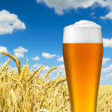 Wheat beer with dew drops Stock Photos