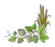Wheat and beer hops branch with wheat ears, leaves and hop cones. Stock Photography