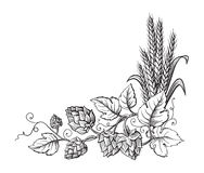 Wheat and beer hops branch with wheat ears, leaves and hop cones. Sketch and engraving design plant angular frame. All element isolated stock illustration