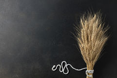 Wheat on black background Royalty Free Stock Photography