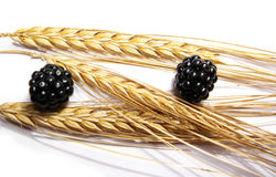 Wheat and blackberries Royalty Free Stock Photos