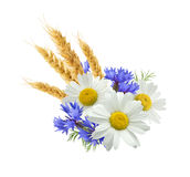 Wheat blue cornflower chamomile isolated on white background Royalty Free Stock Photo