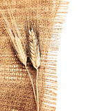 Wheat border Royalty Free Stock Image