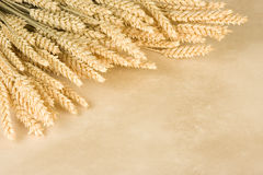 Wheat border. Border frame made of a bunch of wheat and parchment background Stock Images