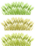 Wheat borders. Spikes of cereal plants isolated on white Stock Images