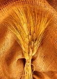 Wheat bouquet Stock Images