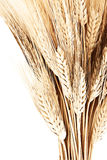 Wheat bouquet. Border, isolated on white background, closeup on autumn ripe plant, harvest concept Stock Image