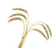 Wheat bouquet Royalty Free Stock Photos