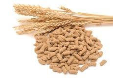 Wheat bran with ear Stock Image