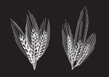 Wheat bread ears sketch Stock Photography