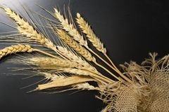 Wheat, bread, food, spike, grain, cereal,baker. Wheat spike isolated on a black background. Bread spike on a black background. Wheat spike isolated on a black Stock Photos