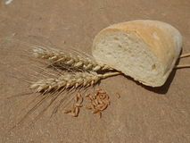 Wheat bread an wheat corn Royalty Free Stock Photos