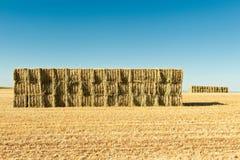 Wheat bullets Stock Photo