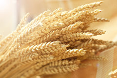 Wheat. Bunch of wheat ears on warm background royalty free stock photography