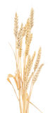 Wheat Bunch Royalty Free Stock Images