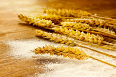 Wheat bunch and flour on vintage wood board Stock Image