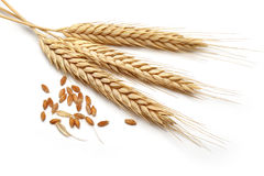 Wheat bundle Stock Photo
