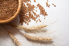 Wheat bundle and cereals. Wheat harvest, photo with copy space Stock Photography