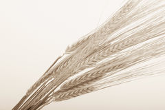 Wheat bundle Royalty Free Stock Photos