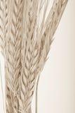 Wheat bundle. Wheat corn ears bundle on table Stock Photo