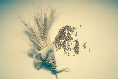 Wheat bundle and germs. Wheat harvest, photo with copy space Royalty Free Stock Image