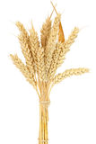 Wheat bundle Stock Images
