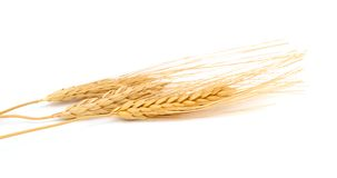 Wheat bundle. Isolated on white Stock Images