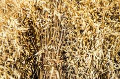 Wheat Bundle Large Stock Photography